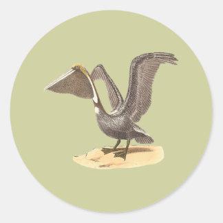 El pelícano de Brown(fuscus del Pelecanus) Etiquetas Redondas