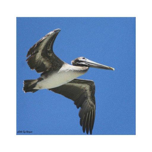 el pelicano del mar lona estirada galerías