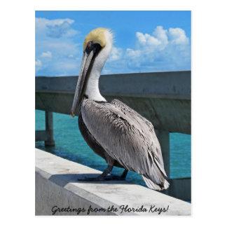 El pelícano en la Florida cierra la postal