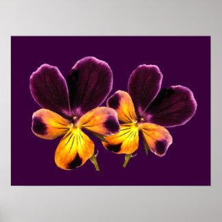 El pensamiento amarillo púrpura floral florece el póster