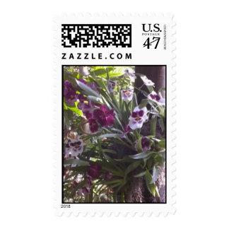 El pensamiento hizo frente a orquídeas timbre postal