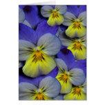 El pensamiento salvaje azul y amarillo le agradece tarjeta