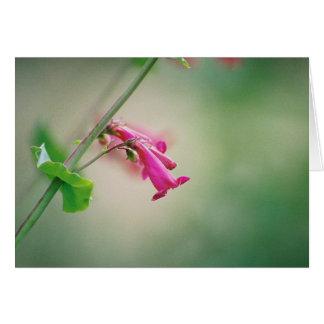 El Penstemon del Parry, Wildflower de Arizona Tarjeta De Felicitación