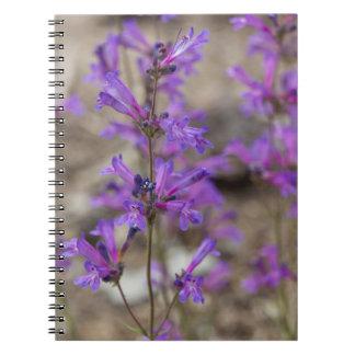 El Penstemon púrpura florece el cuaderno