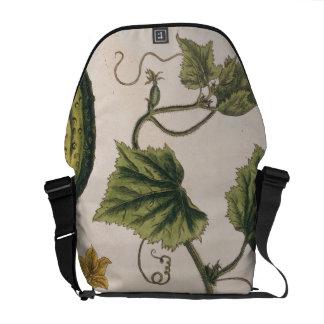 """El pepino del jardín, platea 4 """"de un herbario cur bolsa messenger"""