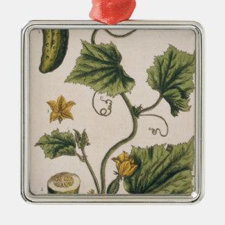 """El pepino del jardín, platea 4 """"de un herbario cur adorno"""
