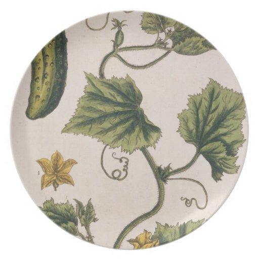 """El pepino del jardín, platea 4 """"de un herbario cur platos para fiestas"""