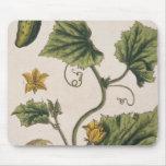 """El pepino del jardín, platea 4 """"de un herbario cur tapete de raton"""