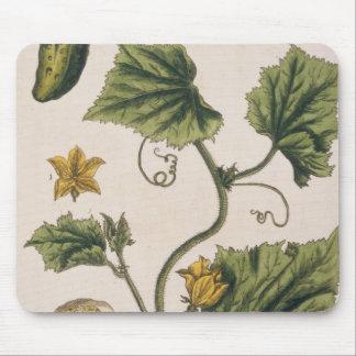 """El pepino del jardín, platea 4 """"de un herbario cur alfombrilla de ratón"""