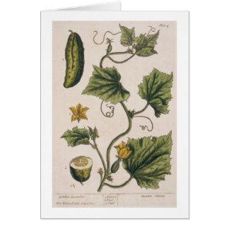 """El pepino del jardín, platea 4 """"de un herbario cur tarjeta de felicitación"""