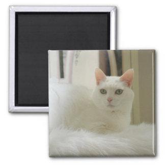 El pequeño gato blanco imán cuadrado
