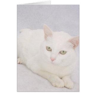 El pequeño gato blanco felicitaciones