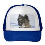 El pequeño perro marrón se sienta en la nieve con  gorras