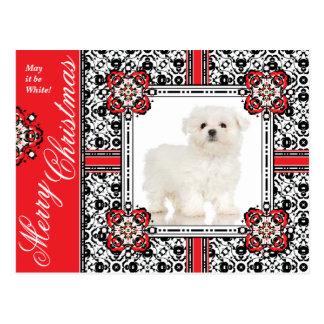 El pequeño perro mullido le desea el navidad blanc postales