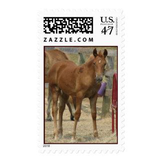 el pequeño sellos postales
