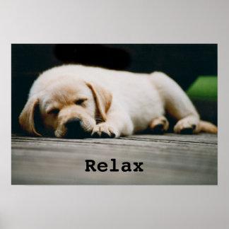 El perrito amarillo joven de Labrador duerme a Póster