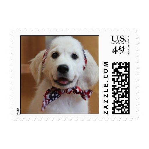 El perrito blanco más lindo en un sello
