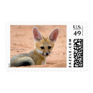 El perrito del Fox del cabo (Vulpes Chama) mira Envio