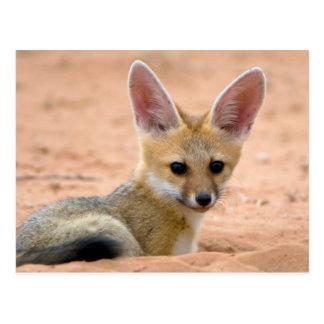 El perrito del Fox del cabo (Vulpes Chama) mira Postales