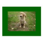 El perrito del labrador retriever inclina las post tarjeta postal