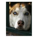 El perrito observa la postal