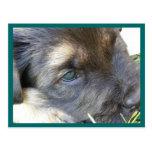 El perrito observa las postales