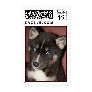 el perrito observa USPS Franqueo