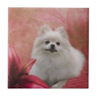 El perro blanco de Pomeranian florece el animal Azulejo Cuadrado Pequeño