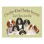 El perro de aguas de rey Charles arrogante no pued Tarjetones