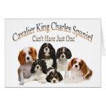 El perro de aguas de rey Charles arrogante no pued Tarjetas