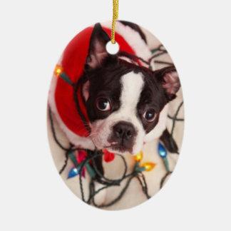 El perro de Boston Terrier en el centelleo Ornato