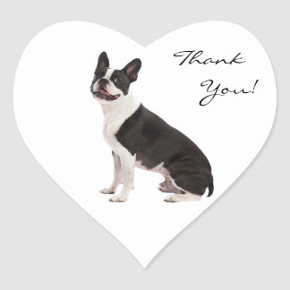 El perro de Boston Terrier le agradece los Pegatina En Forma De Corazón