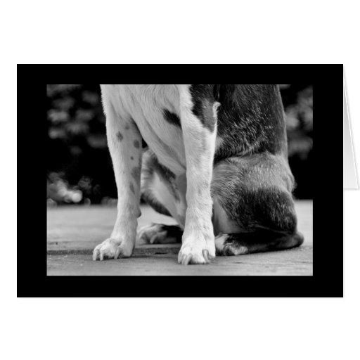 El perro de Boston Terrier sienta la tarjeta