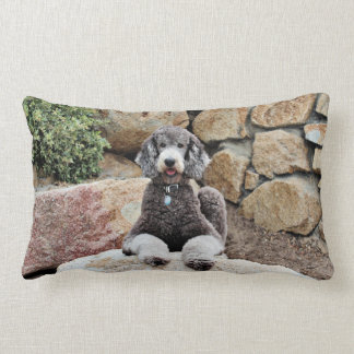 El perro de caniche estándar gris goza de la playa cojin