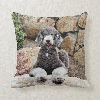 El perro de caniche estándar gris goza de la playa almohadas
