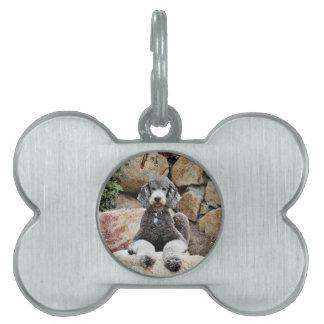 El perro de caniche estándar gris goza de la playa placas de nombre de mascota