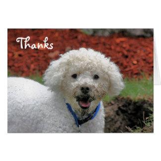 El perro de caniche hecho frente fango le agradece tarjeton
