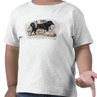 El perro de Esquimaux familiaris del Canis i edu Camiseta