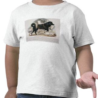 El perro de Esquimaux (familiaris) del Canis i Camiseta