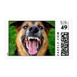 El perro de pastor alemán descubre los dientes sello