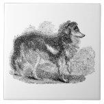 El perro de pastor de los 1800s del vintage - perr azulejos ceramicos