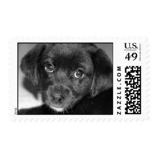 El perro de perrito observa el sello