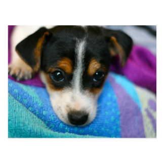 El perro de perrito observa la postal