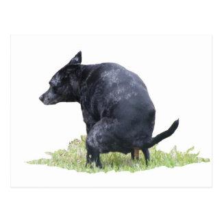 El perro de Pooping reflexiona Postal