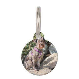El perro de Schnoodle goza de la playa de Carmel Placa De Mascota