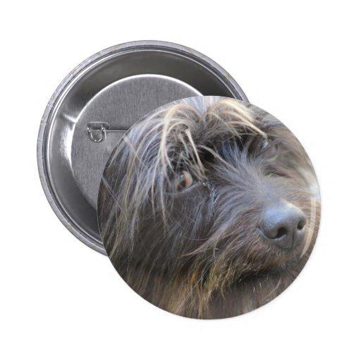 El perro de Shiggy Pins