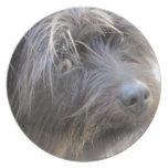 El perro de Shiggy Plato Para Fiesta