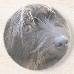El perro de Shiggy Posavasos Personalizados