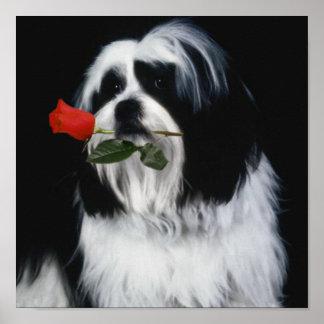 El perro de Shih Tzu Póster