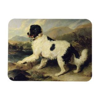 El perro de Terranova llamó a Lion, 1824 (el aceit Iman Rectangular